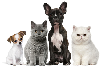 Did you know pets can wear contact lenses?