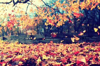 Consejos para cuidar de la vista en otoño