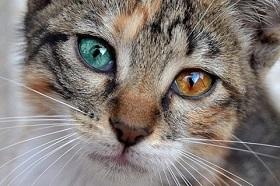 Les troublantes anomalies de l'oeil