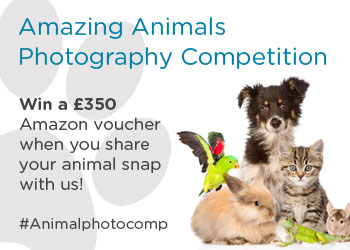 Win £350 for your best animal photo!