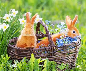 A Pasqua conta le uova e vinci!