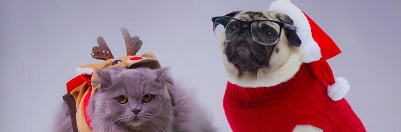 Gizmo en Minoes: echte vriendschap!