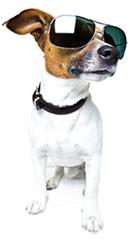 Un chien portant des lunettes