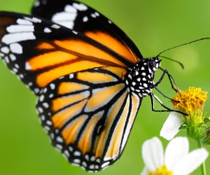 vista de mariposas