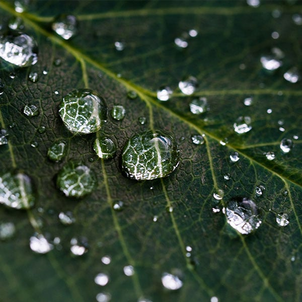 Zoomed in view of rain drops on a leaf