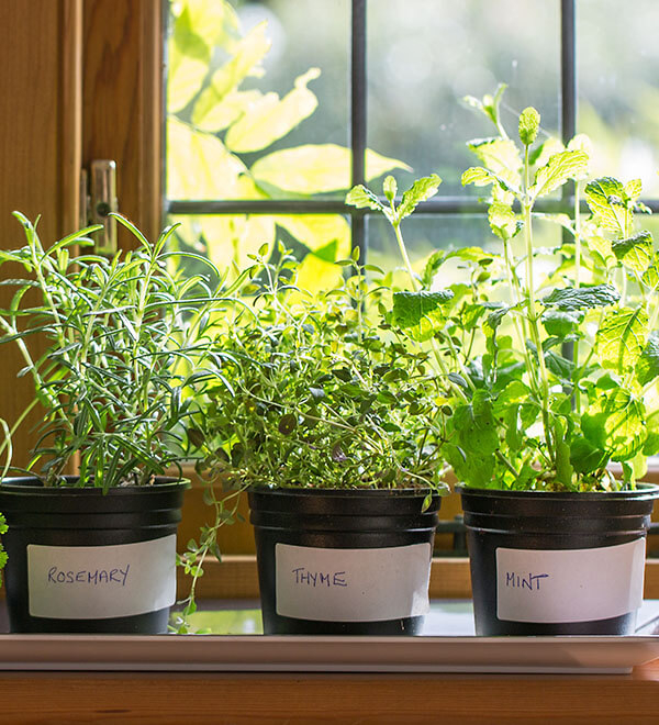 Potted herb plants on windowsill