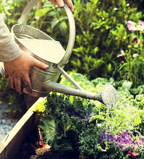 Watering flowers with watering can in garden