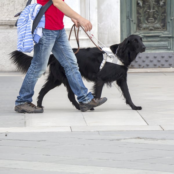 black-guide-dog-on-leash