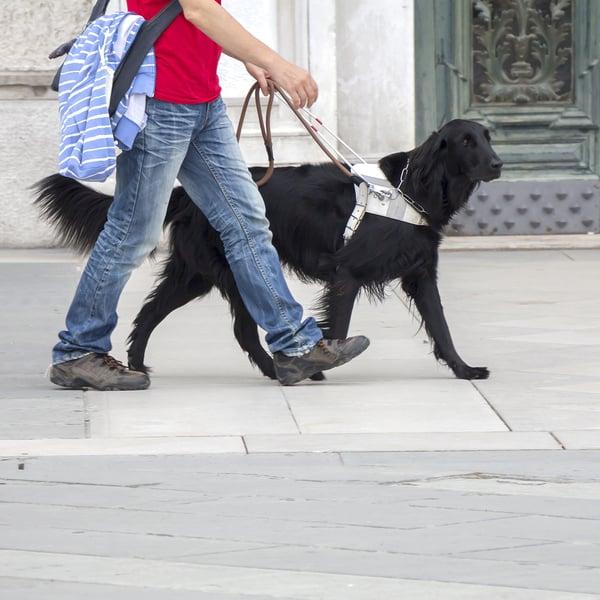 black-guide-dog-on-leash