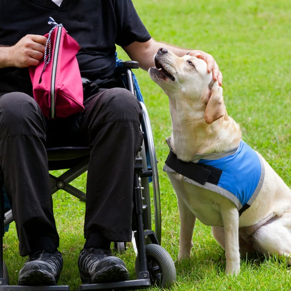 guide-dog-by-wheelchair