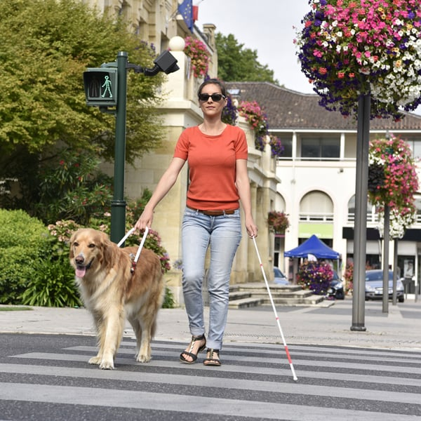 dog-leading-blind-woman